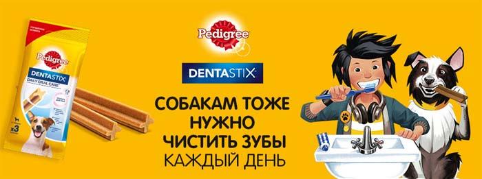 Собакам тоже нужно чистить зубы каждый день